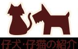 仔犬・子猫の紹介